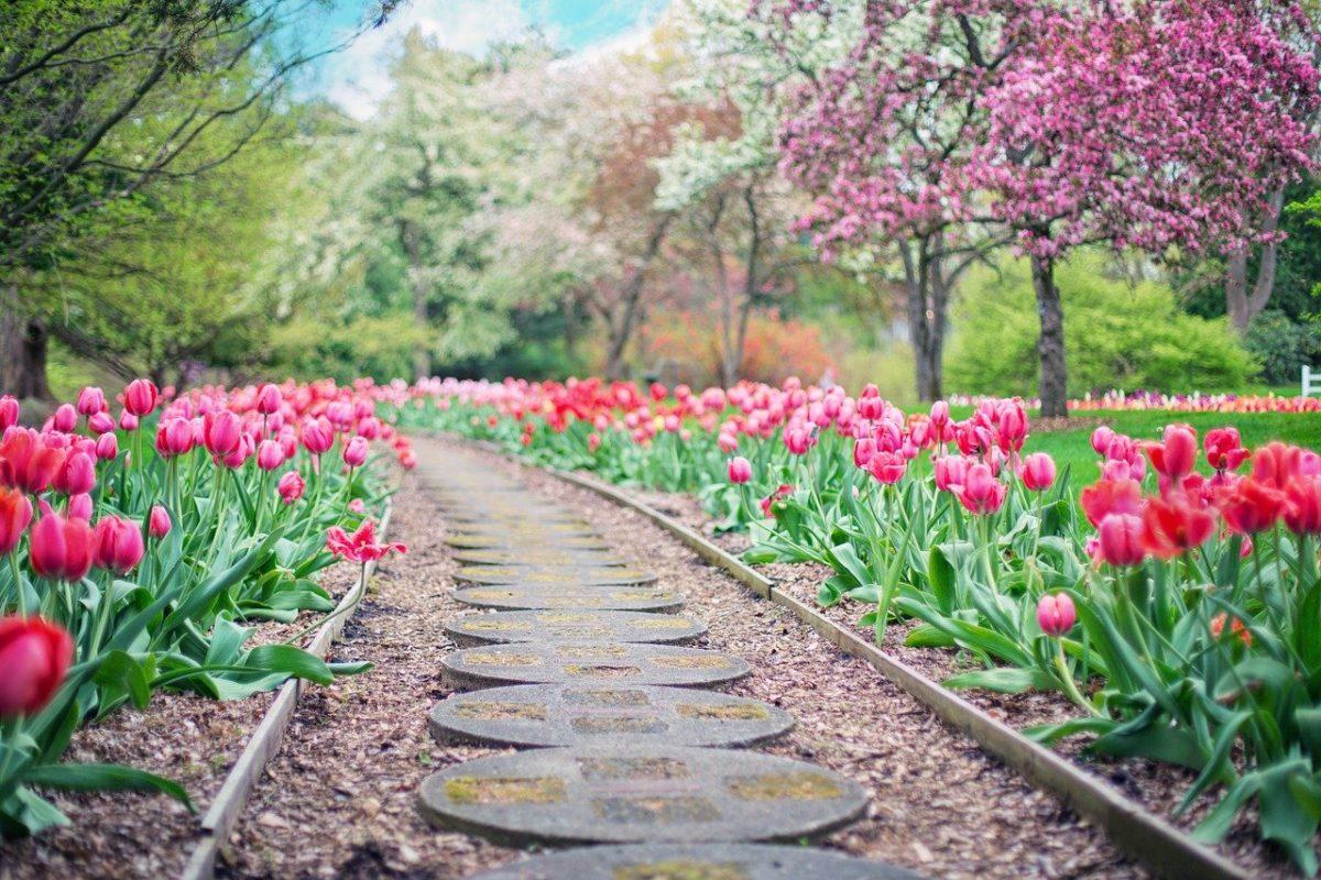 Piękny oraz uporządkowany ogród to zasługa wielu godzin spędzonych  w jego zaciszu w toku pielegnacji.